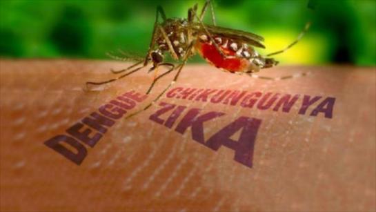 virus-de-zika